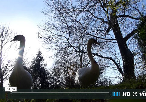 Hillbilly swans at the Mill
